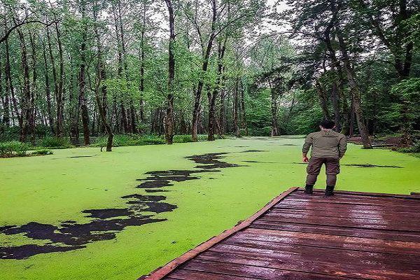 توصیف زیباترین جنگل شمال - سی سنگان
