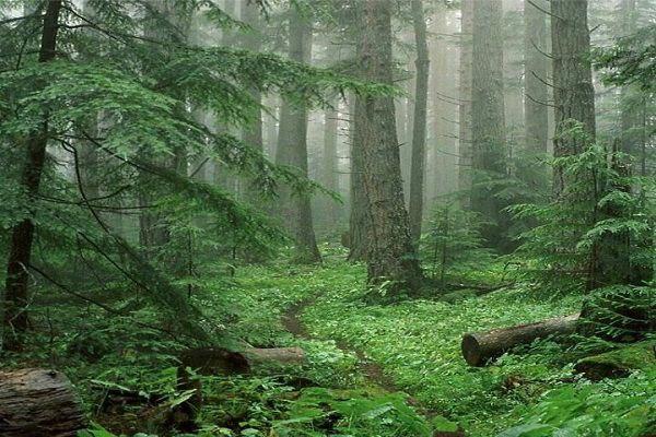 توصیف زیباترین جنگل شمال - النگدره