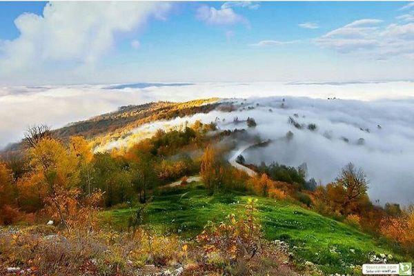توصیف جنگل دالخانی از جنگل های شمال