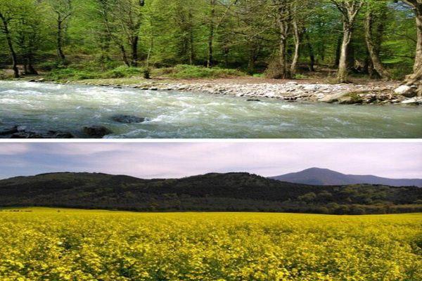 توصیف زیباترین جنگل شمال - شیرآباد