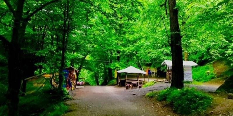 پارک-جنگلی-صفارود