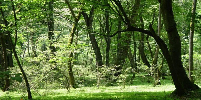 پارک جنگلی نور-جاهای دیدنی گرگان تا رامسر