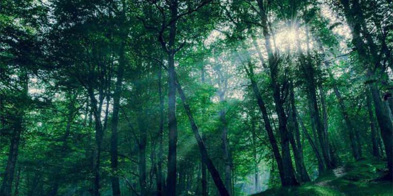 گردش در جنگل های معروف رامسر