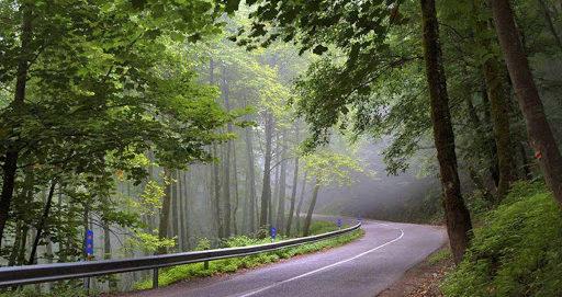 زیباترین جنگل شمال