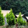 روستای-زوات-چالوس،-بهترین-مکان-برای-اجاره-ویلا-و-اقامتی-دلپذیر