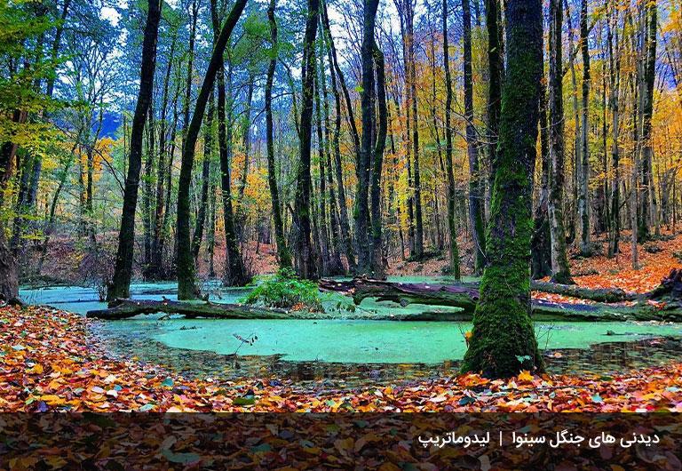 زیباییهایی-از-جنگل-سینوا-که-شما-را-عاشق-خواهد-کرد!!-جنگل-سینوا-چالوس
