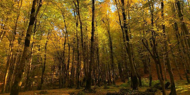 پارک-جنگلی-فین-چالوس،-اقامتگاهی-دلچسب-برای-مسافران!