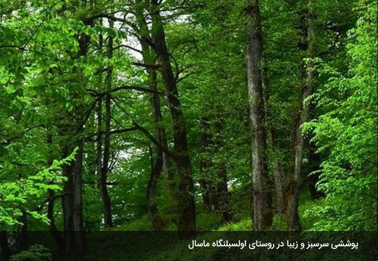 پوشش-گیاهی-و-حیوانی-روستای-اولسبلنگاه