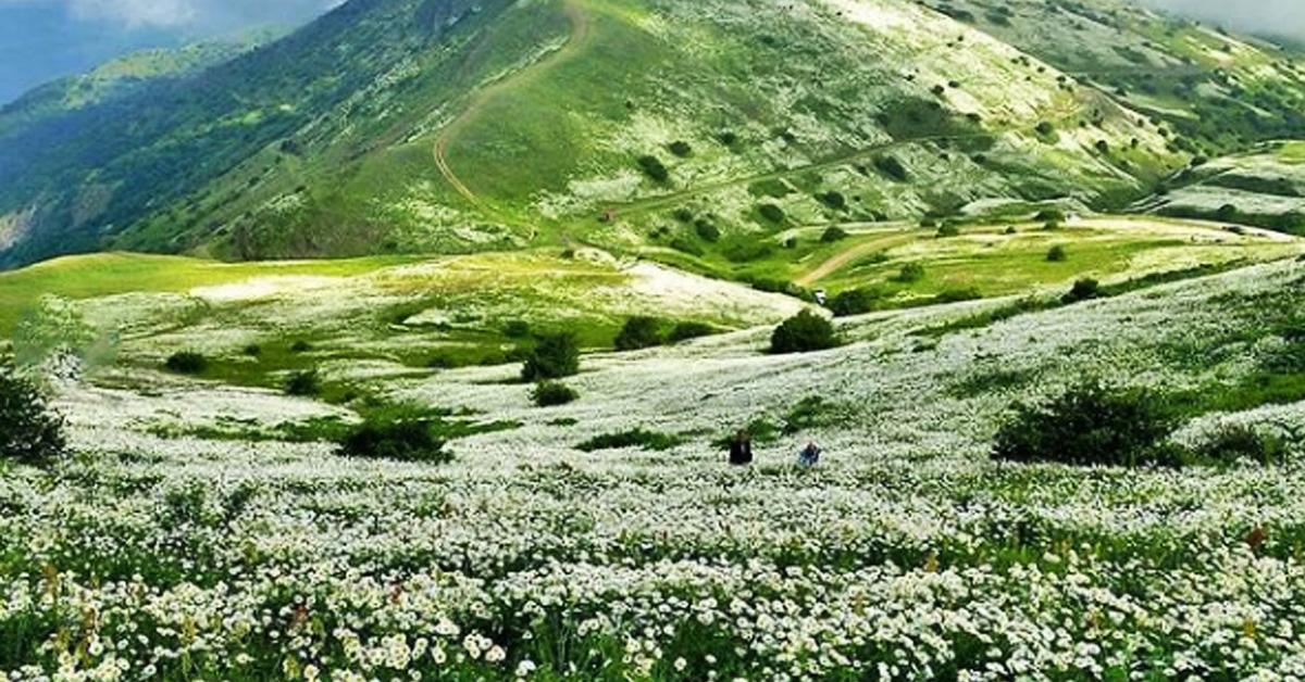 جنگل های استان اردبیل