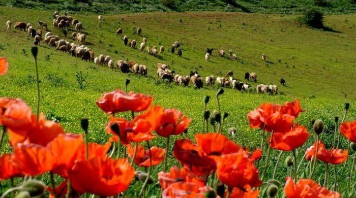 روستای ننه کران زیباترین روستاهای گردشگری اردبیل