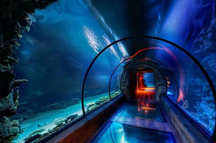 تونل آکواریوم از جاهای گردشگری و دیدنی اصفهان