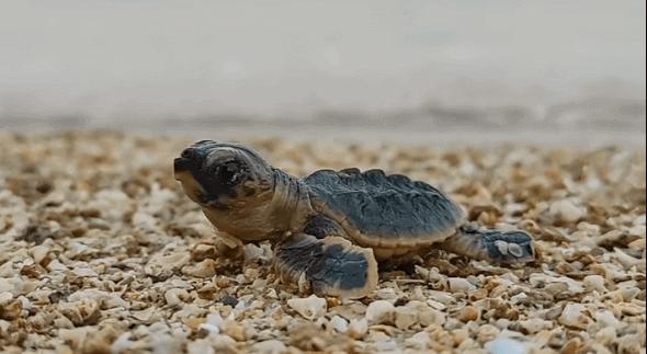 ساحل لاک پشت ها در جزیره قشم