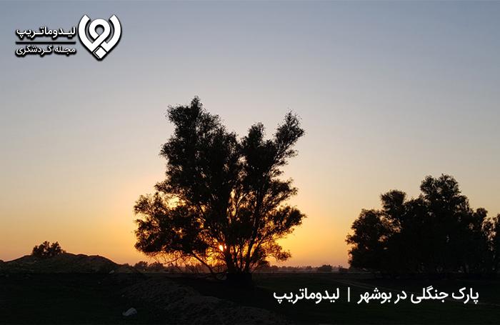 برای-یک-طبیعتگردی-لذت-بخش-در-بوشهر،-کجا-بریم؟