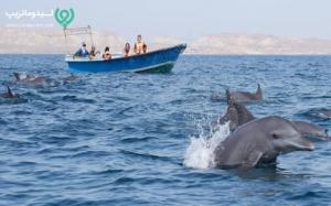دلفین های جزیره هنگام