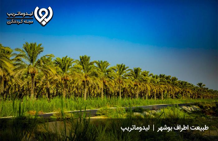 روستای-آب-طویل-بوشهر؛-روستایی-با-زیباترین-پارک-جنگلی