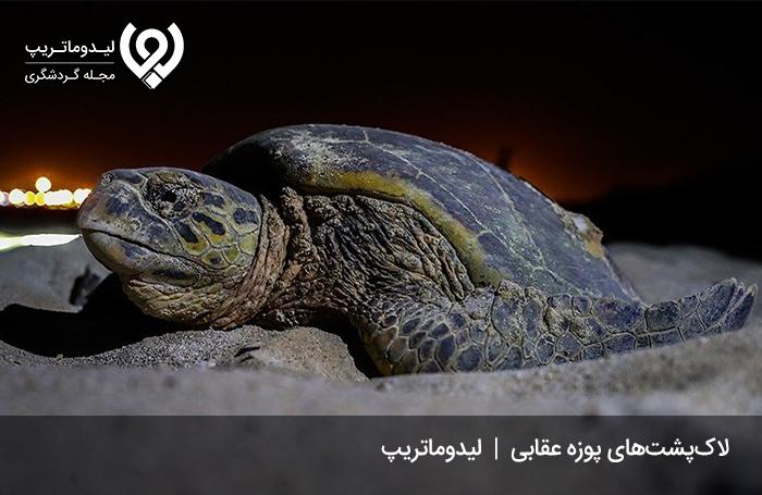 زیستگاه-لاکپشتهای-پوزه-عقابی1