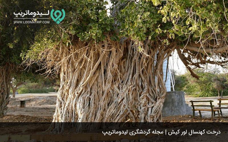 درخت کهنسال روستای باغو کیش
